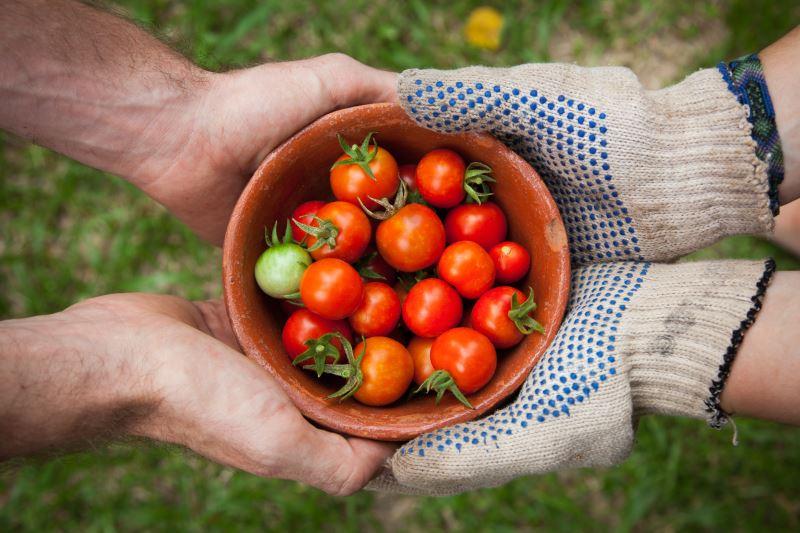 Growing Food in Philadelphia